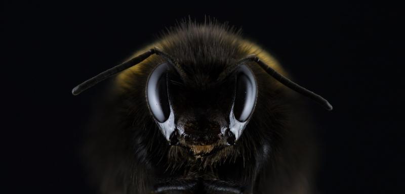 Ako sa chrániť pred hmyzom